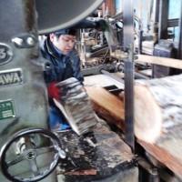 楢の丸太を製材・乾燥中