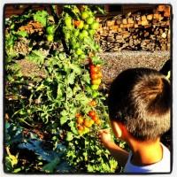 我が家の畑20120911
