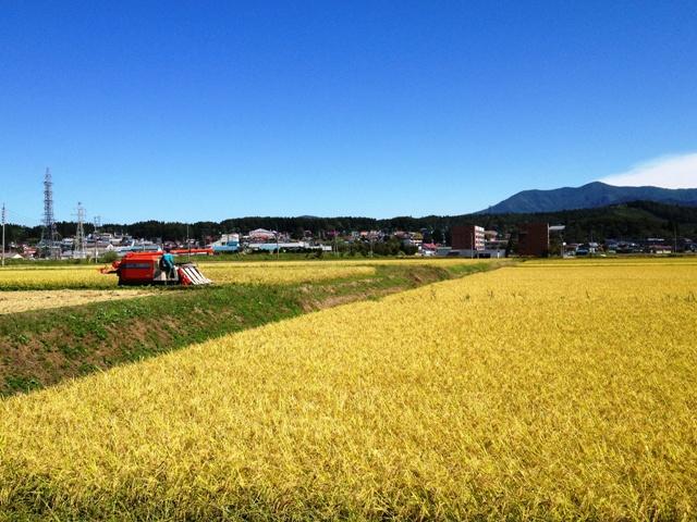 稲刈り20120927