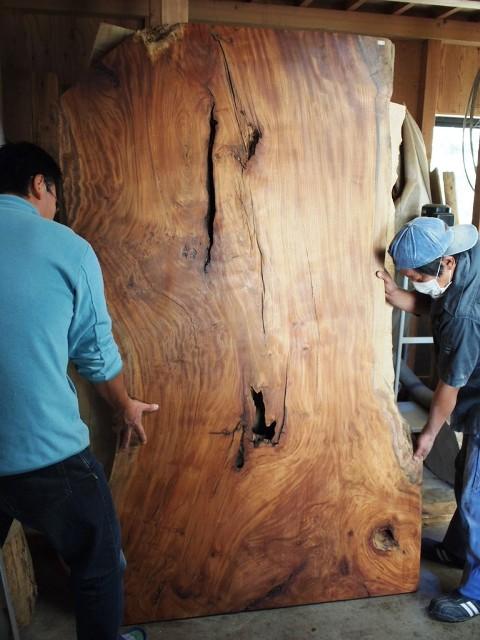 巨大欅一枚板、写真撮影中