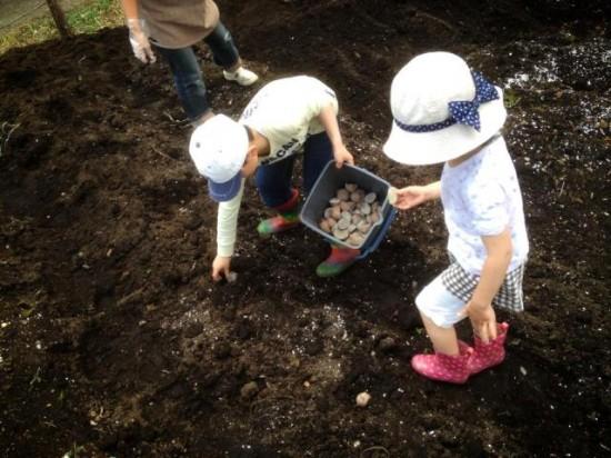 畑に作物を植え付けました2