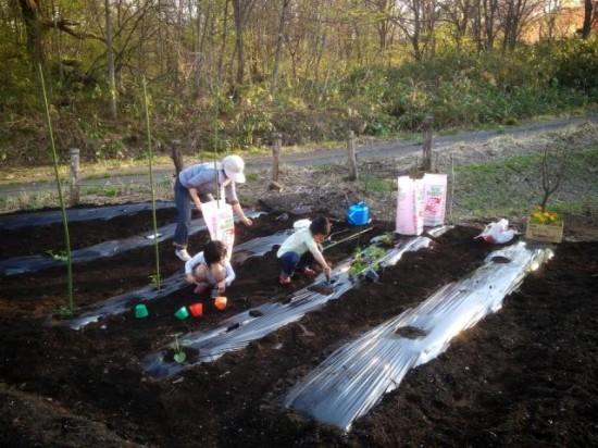 畑に作物を植え付けました3