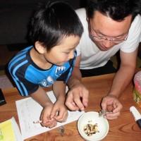 閲覧注意!:蜂の子(アシナガバチ)を食べてみました