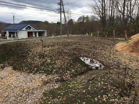畑の上の雪が消えました!20170426-1