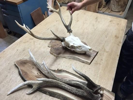 鹿の角飾り作り(エンジュ一枚板使用・角のみ・頭蓋骨付き)20141229-2