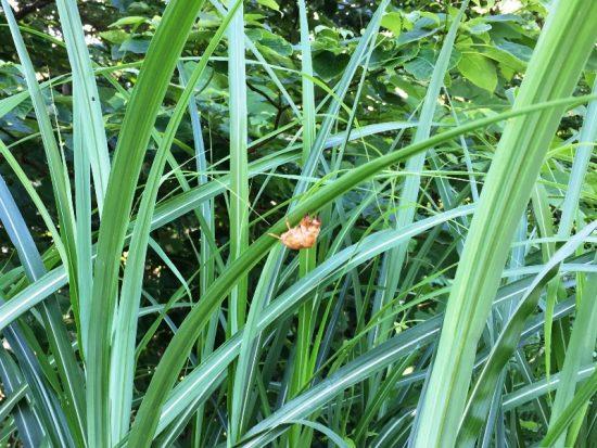黒姫高原もセミの鳴く季節に。。