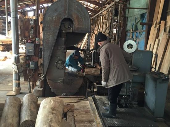 今日の作業20150203~エンジュ丸太切株の製材~2