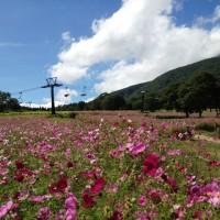 黒姫コスモス園へ20120917