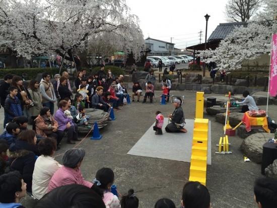 臥竜公園の桜~猿回し~20150412