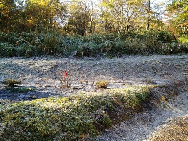 初霜20121103