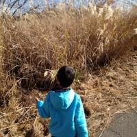 散歩の風景20121124~カマキリの卵嚢探し~