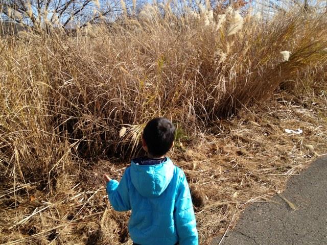 散歩の風景20121124~カマキリの卵嚢探し~1