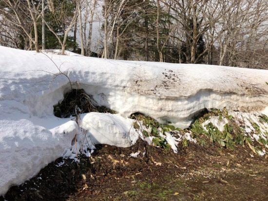 敷地の雪がだいぶ解けてきました20180312