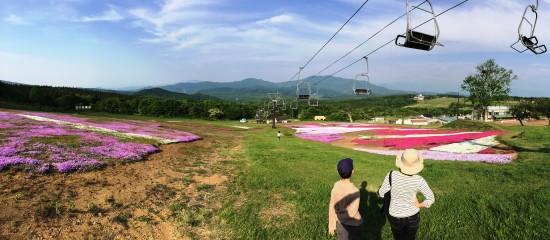 旬花咲く黒姫高原の芝桜20150524-1