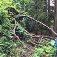苗名滝探検隊~信濃路自然歩道を歩こう~8