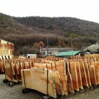 岐阜銘木市場へ20130109