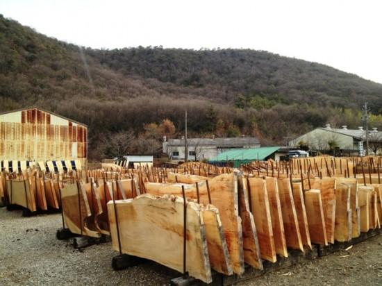 岐阜銘木市場へ20130110-1