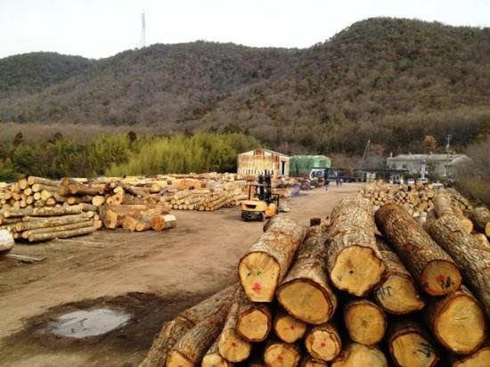 岐阜銘木市場へ20130110-2