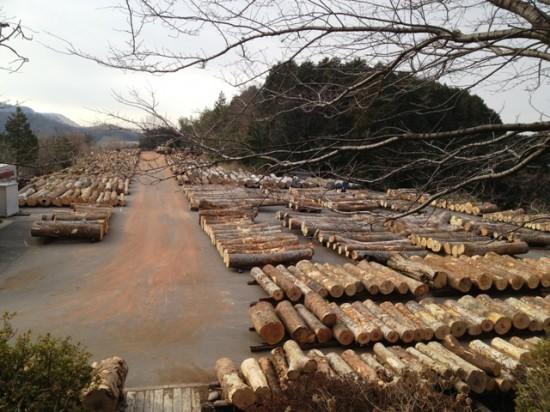 岐阜銘木市場へ20130110-3
