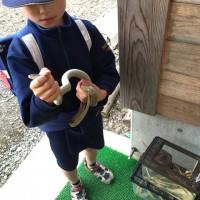 息子が学校でヘビを捕まえてきました