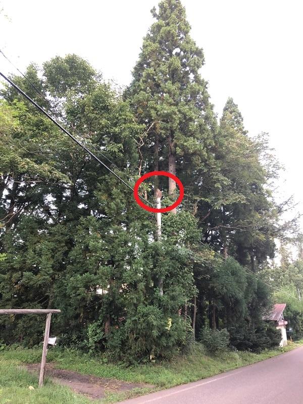 近所に猿が出没するようになってきました20180919-1