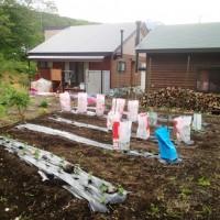 我が家の畑20130528