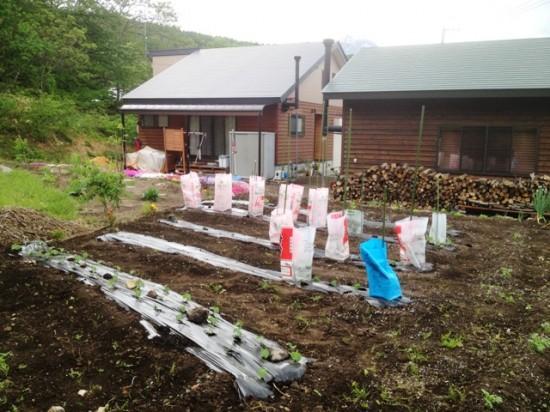 我が家の畑20130528b