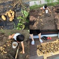我が家の様子20150816~収穫、草取り、そして息子の夏休みの自由研究、ついに完成!~