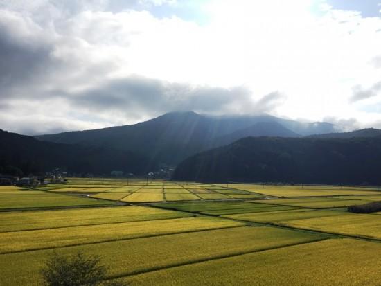 信州・黒姫の様子20150921~田が金色に輝いてきました~