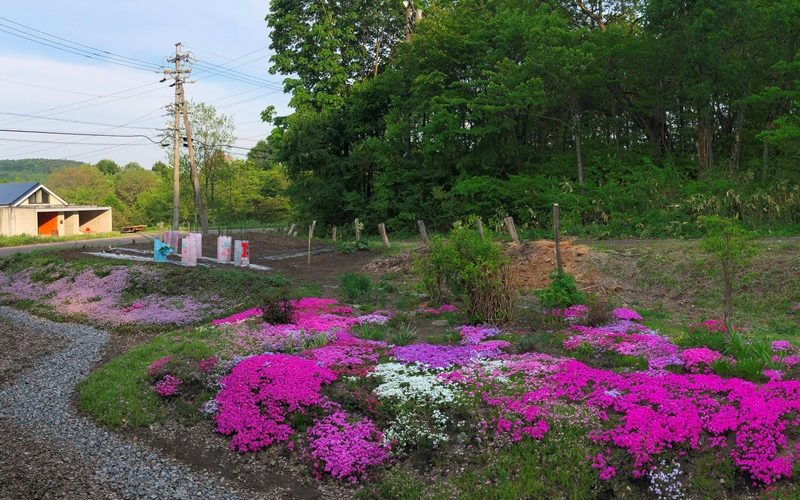 我家の庭20190526~芝桜満開~