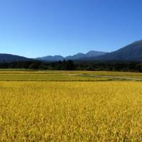 信州・黒姫今日の景色20130920~収穫の季節になりました~