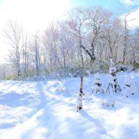 今朝の積雪は約15cm。20191130
