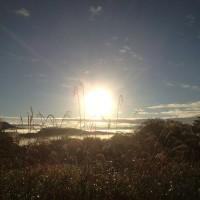今朝のジョギングの風景20131021