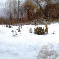 我家の庭20131115