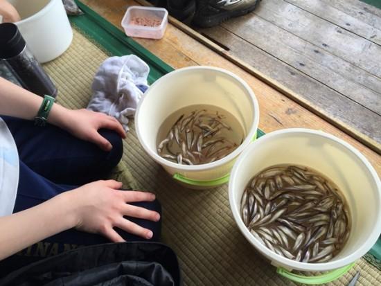 「子供わかさぎ釣り教室」に参加20160318-4