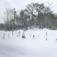 我が家の畑の雪が全て解けました!20160327