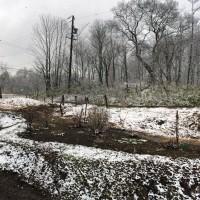 今朝の信州・黒姫20160411~結構な勢いで雪が降っています~