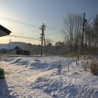 我が家の庭の風景20160412~朝起きたら庭が真っ白になっていてびっくり!