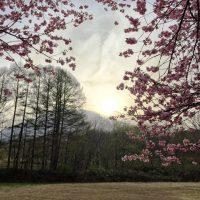 集落の桜が満開に20160424