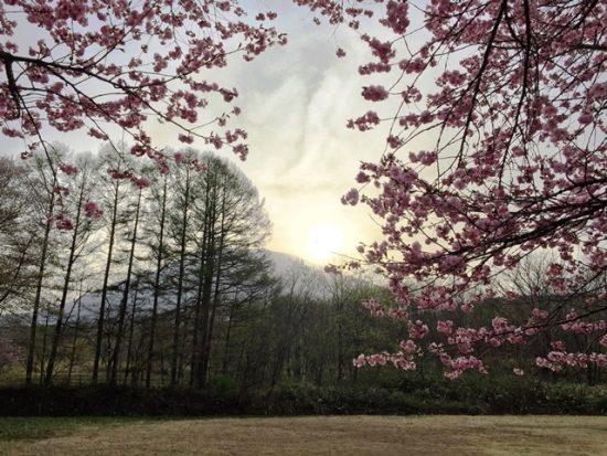 集落集会所前の桜が咲きました20160424