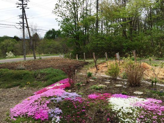 我が家の庭の風景20160506~芝桜が綺麗に咲いてきました~