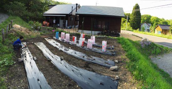 ちょっと遅くなりましたが。。畑に枝豆を植えました20160522-1