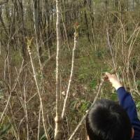 タラの芽が出る季節に20140504