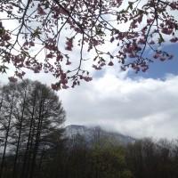 集落の公園の桜が咲き始めました20140501