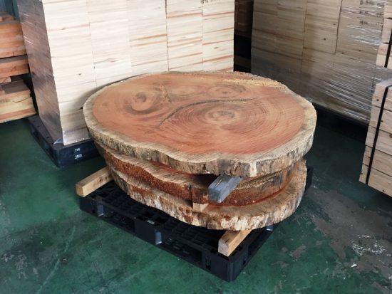 半日がかりで3枚の巨木輪切りを取りました20160723