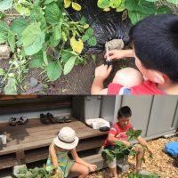 枝豆の収穫!20160813