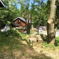 貸家の栗の木の枝を伐採しました20160909