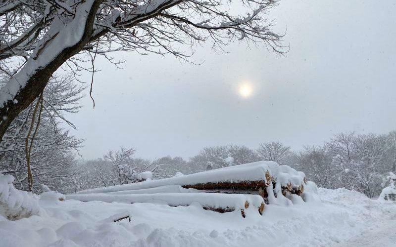信州・黒姫散歩中の風景20210108-1