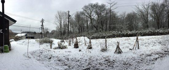 今年は11月中からよく雪が降っています20161124