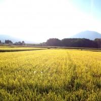 今日の信州・黒姫20140919~収穫の季節に~